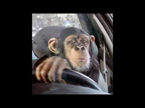 monkey drives honda pilot off of cliff into minefield